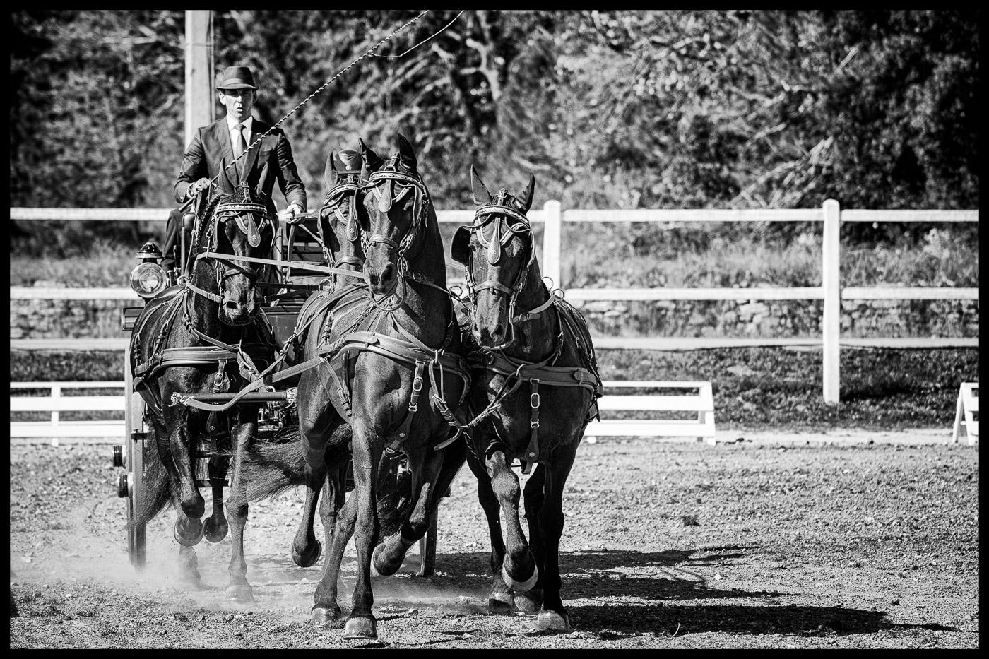 dressage, C.PELLE, équitation