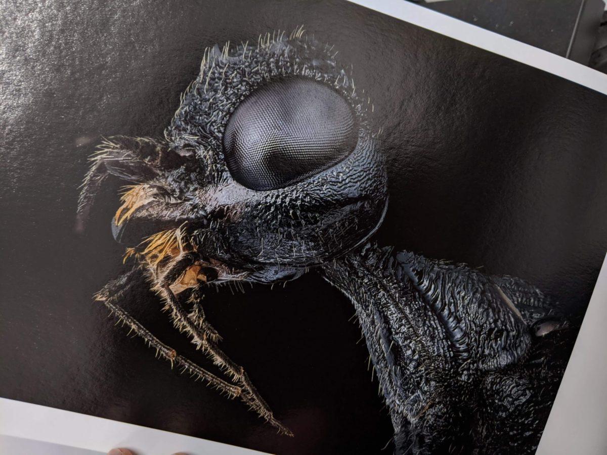 Portrait d'insecte en impression FineArt