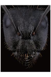 portrait de fourmi