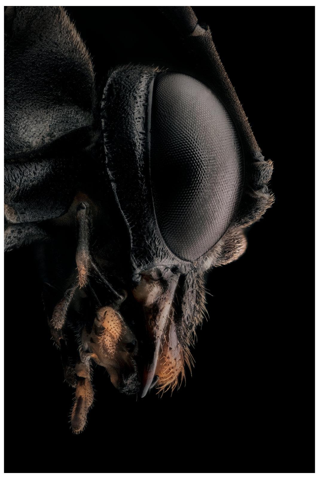 Symphyte