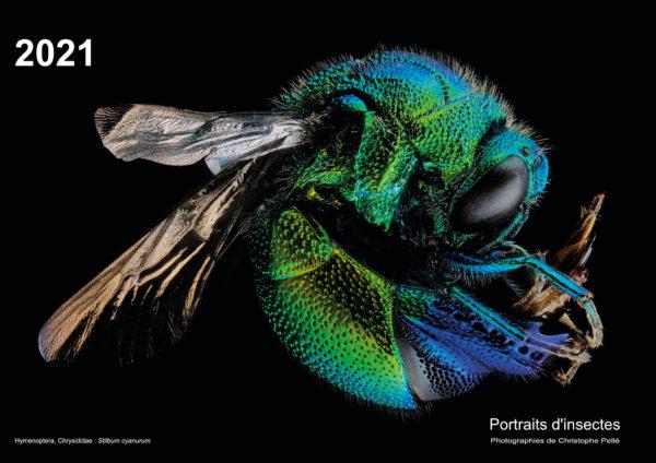 Couverture du calendrier 2021 illustré de portraits d'insectes.